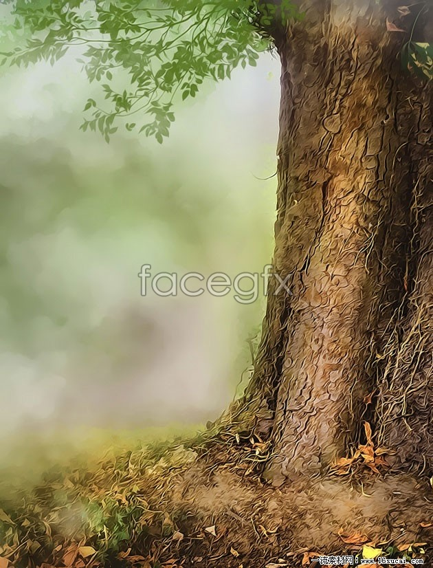 HD ancient forest trees photo