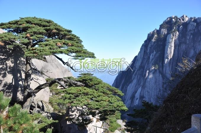 Huangshan pine HD desktop wallpaper