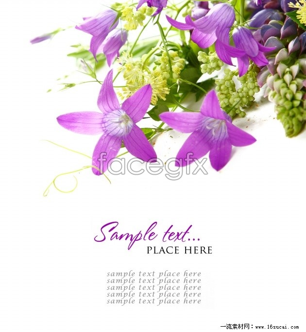Purple flowers backgrounds high resolution images