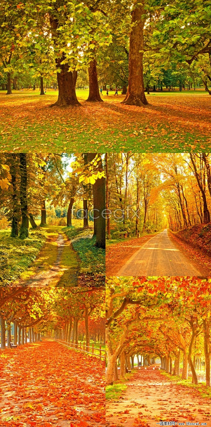 Autumn maples high definition pictures