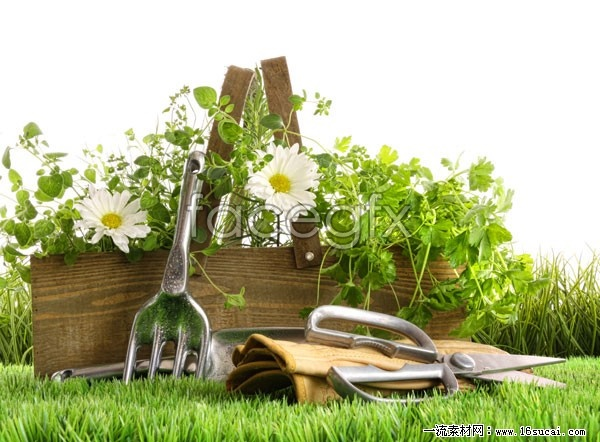 Green idyllic life HD pictures