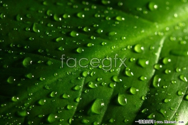 Green leaf with dew high definition pictures