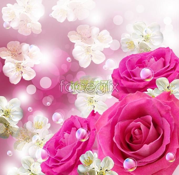 Roses beautiful and warm HD photos