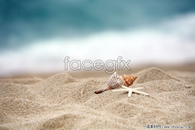 Sea shells on the beach HD pictures