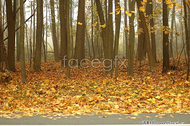 Autumn Maple Woods carpeted with a high definition pictures