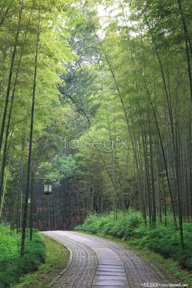 HD bamboo forest desktop wallpaper s