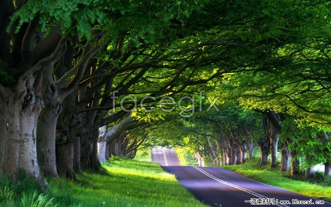 Highway trees high definition pictures