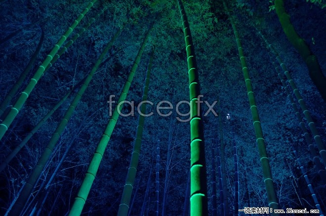 Night scenery of bamboo forest high definition pictures