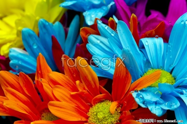 Summer open flowers HD picture