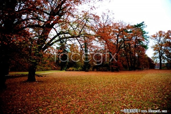 Download HD pictures fall forest landscape
