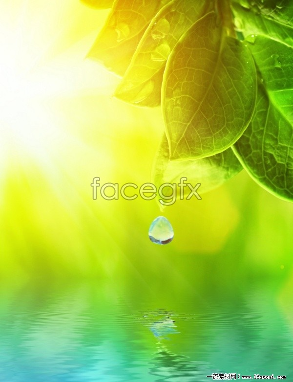 HD green leaf drop pictures to
