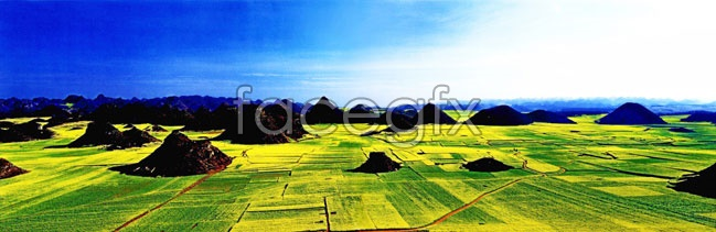 HD paddy field landscape on the outskirts the picture