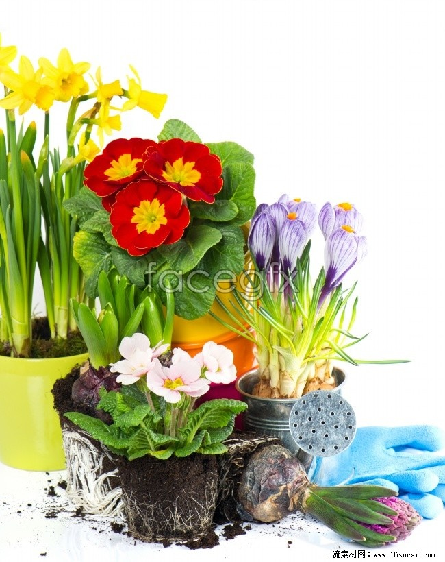 Potted flowers pictures