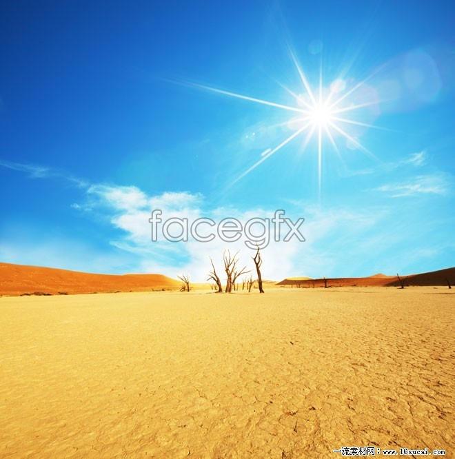 Summer desert high definition pictures