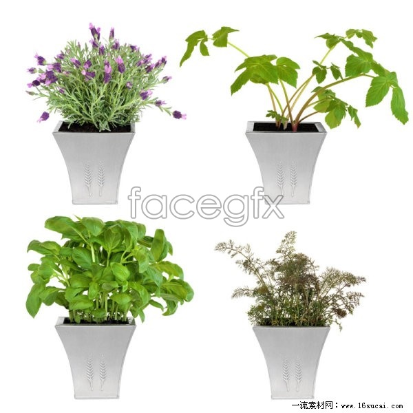 4 flower pot plants HD image