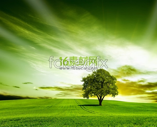 Lush grassland in HD pictures