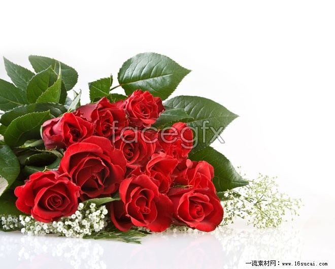 Red Roses HD picture