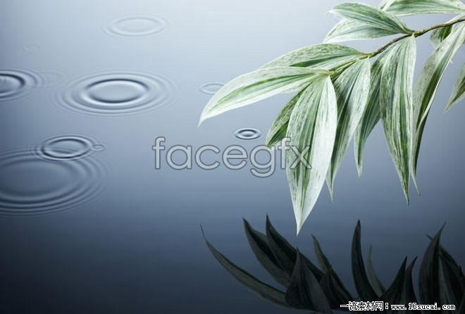 Bamboo waves high definition pictures