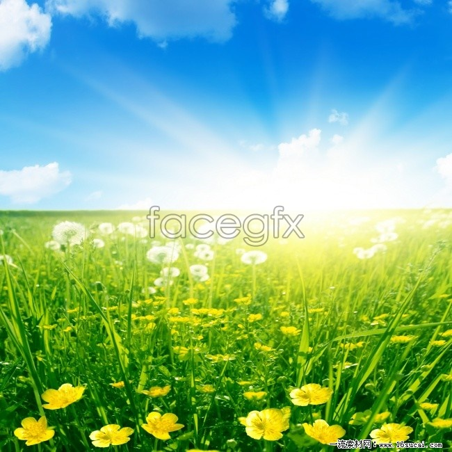 Flower in the Sun high definition pictures