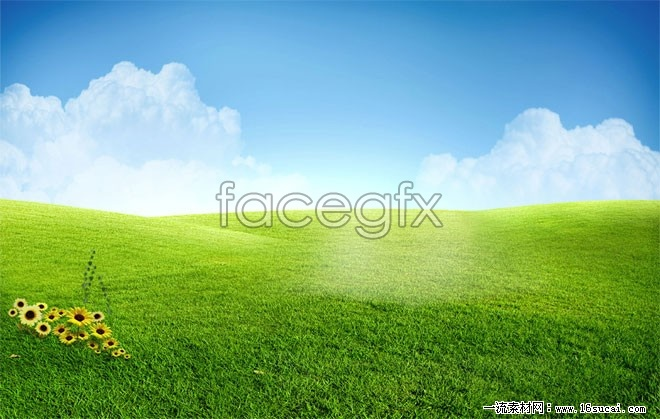 Green grass high definition pictures