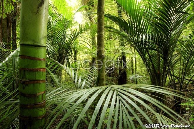 HD primeval forest landscape pictures