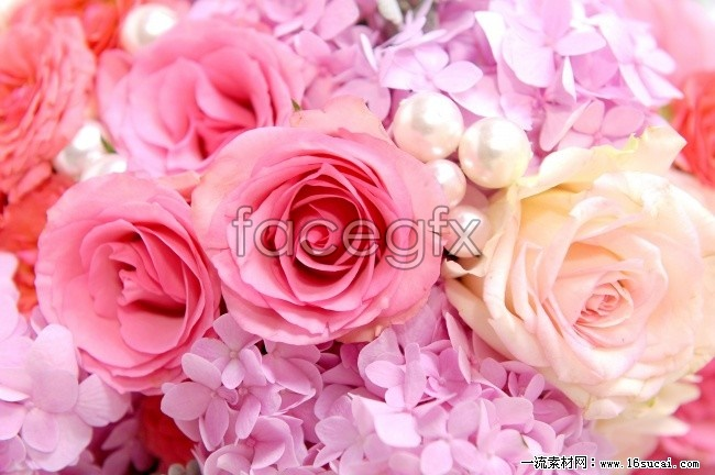 Pink Roses pictures HD footage