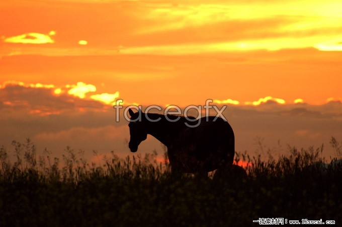 Sunset high definition pictures