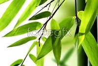 Elegant bamboo banner background high definition pictures