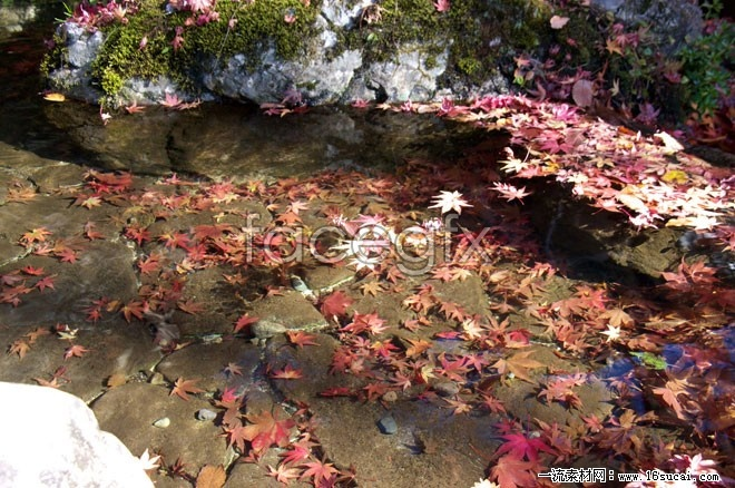 Creek Maple Leaf Chinese Restaurant fluttered high definition pictures