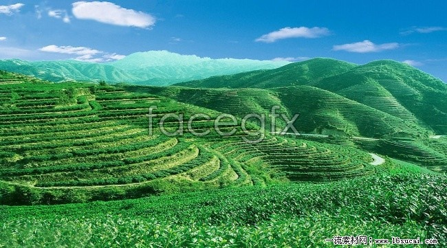 Green tea HD picture