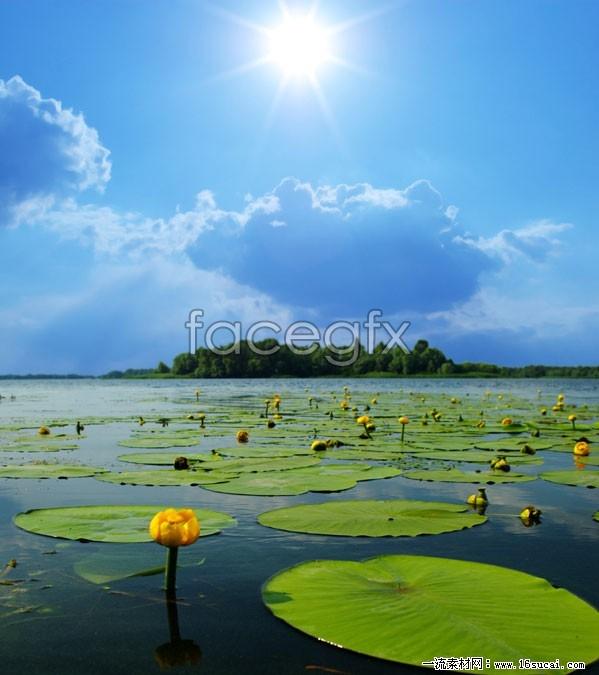 Lily pond landscape high resolution images