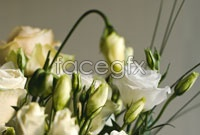 White roses pictures HD