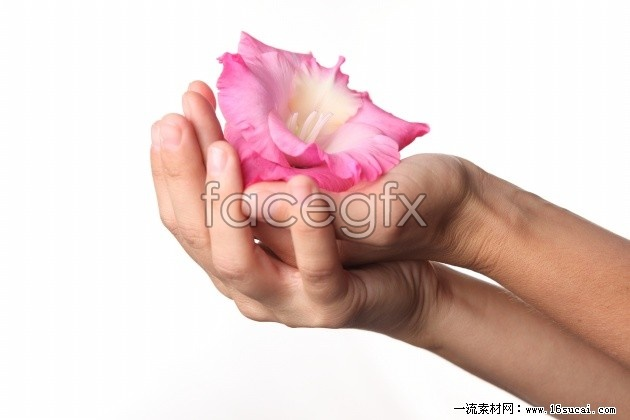 Download HD picture with flowers
