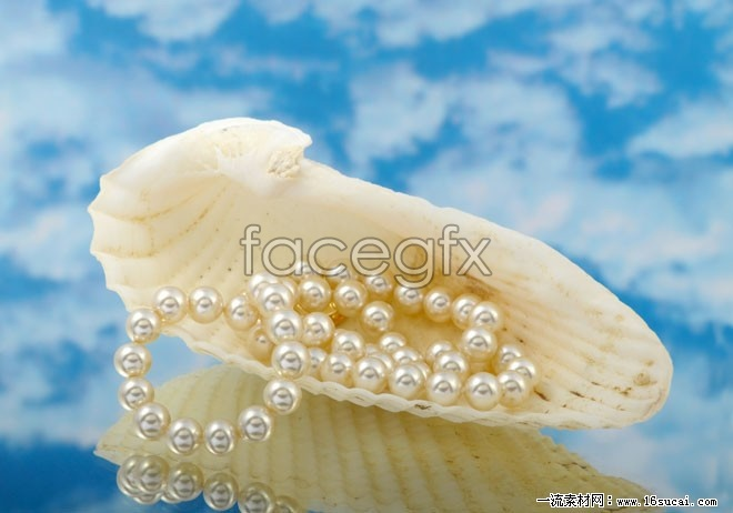 HD shell Pearl Necklace picture