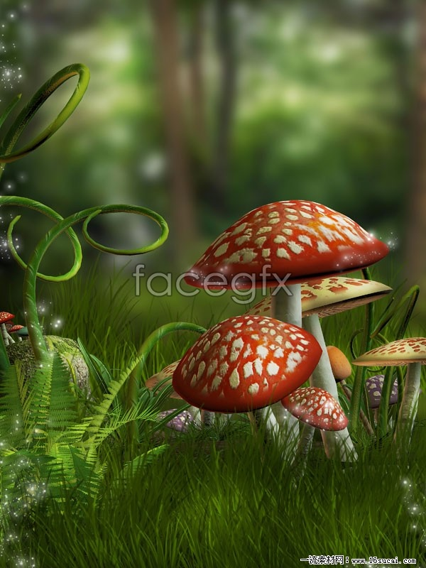 Dream forest mushroom pictures HD