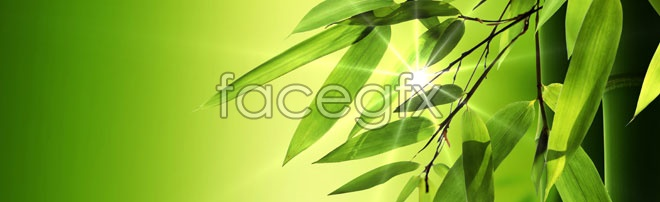 Green bamboo banner background high definition pictures