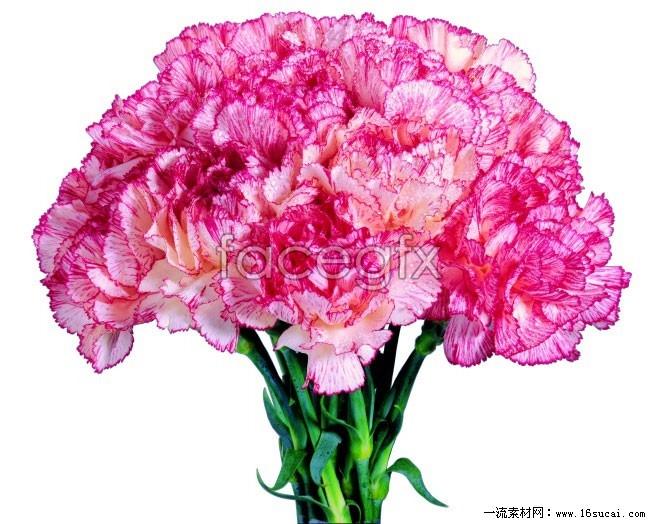 Purple carnations bouquet HD pictures