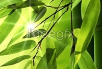 Green banner background bamboo high definition pictures