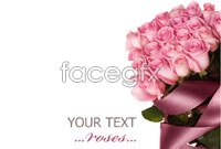 Pink Roses high definition pictures