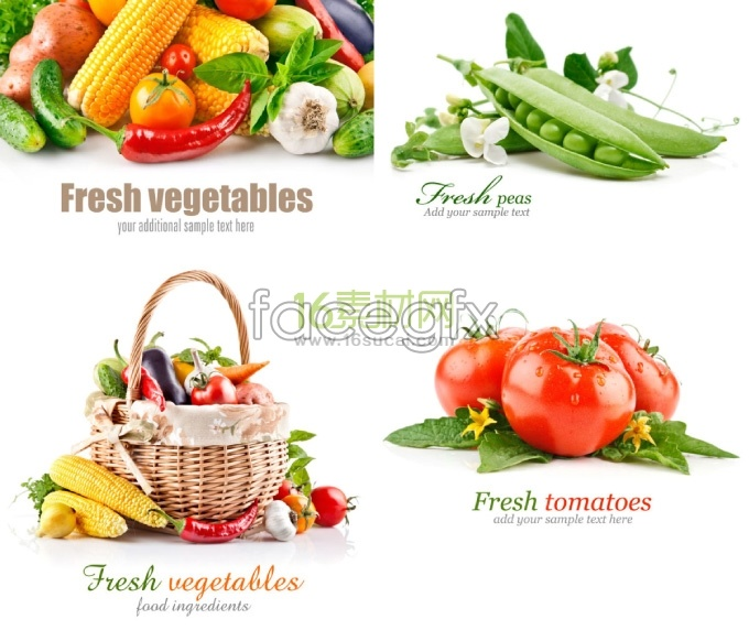 Beautiful vegetable HD Photo