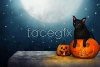 Halloween Pumpkin cat HD pictures