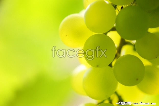 HD green grape fruit pictures