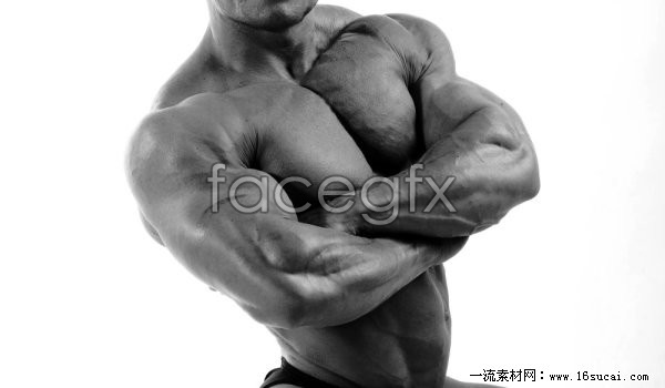 Strong muscle high definition pictures