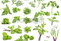 Green vegetable  high definition pictures