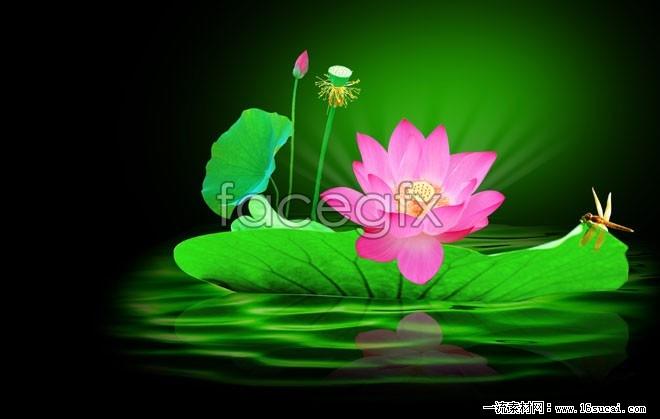 Lotus Lotus Dragonfly pictures HD