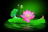 Lotus Lotus Dragonfly pictures HD