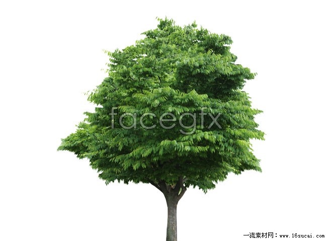 Big tree high definition pictures
