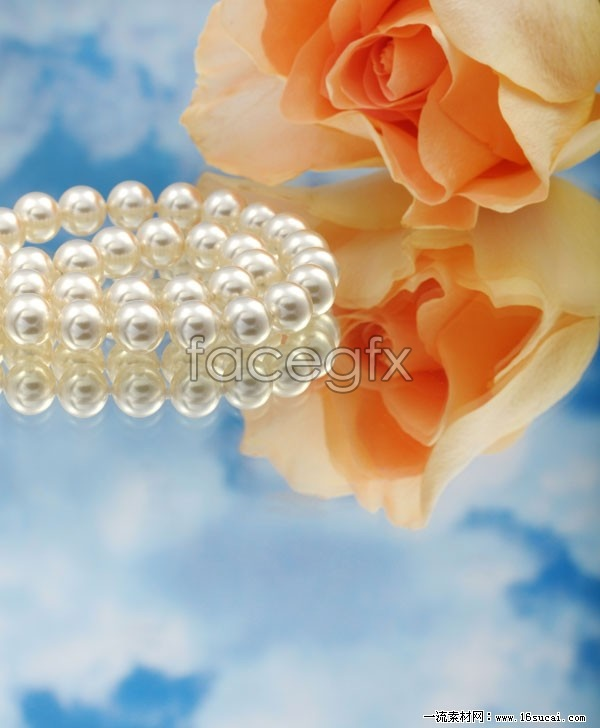 Pearl Necklace roses HD picture