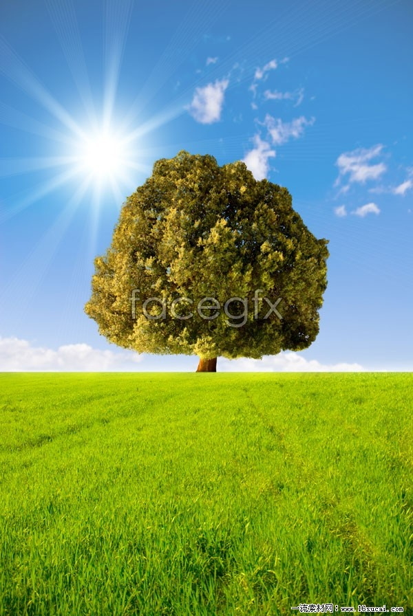 Sky meadow tree high definition pictures