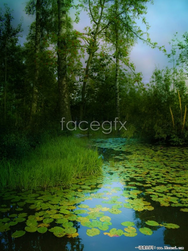 Forest pond view high definition pictures